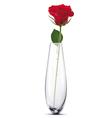 Rose in a vase vector image