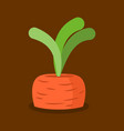 carrots growing isolated fresh vegetables in vector image vector image