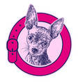 dog russian toy terrier in a collar logo hand vector image