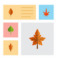 flat icon maple set of linden alder aspen and vector image vector image