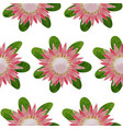 protea seamless pattern vector image vector image