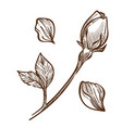 rose plant closed bud on stem and petals isolated vector image vector image