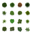 Trees top view for landscape vector image vector image
