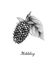 berry fruits of hand drawn sketch delicious vector image vector image