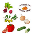 hand drawn vegetarian isotaled vector image vector image