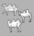 image of a camel isolated object on a vector image