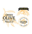 olive branch in engraving style with text vector image