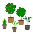 set pot plants with flowers and leaves group vector image vector image