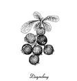 berry fruit hand drawn sketch of jostaberries vector image vector image