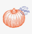 pumpkin hand drawn vegetable engraved style vector image vector image