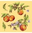 sketching of apples vector image