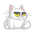 cartoon grumpy white cat vector image vector image