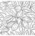 cocoa branches pattern on white background vector image vector image