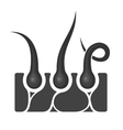 hair follicle icon vector image