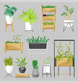 plants in flowerpots potted houseplants vector image vector image