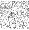 guelder rose branches pattern vector image