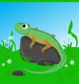 lizard on stone vector image