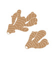 ginger root set vector image vector image