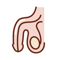 human body male reproductive system anatomy organ vector image vector image