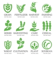 Isolated abstract green color wheat ear logo vector image vector image