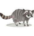 raccoon animal cartoon vector image vector image