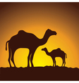 caravan of camels image design vector image