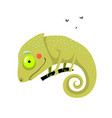 little amusing and funny green color chameleon vector image