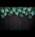 christmas background with fir branches on a black vector image vector image
