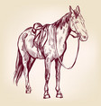 horse hand drawn illustration realistic vector image vector image