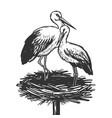 stork in nest animal engraving vector image