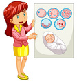 Woman holding diagram of embryo vector image vector image