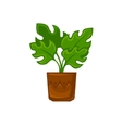 Pot plant with flower and leave vector image