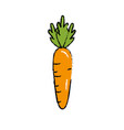 delicious and health carrot vegetable vector image vector image
