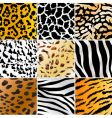 wild patterns vector image vector image