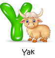 Cartoon Y of letter for Yak Cartoon vector image
