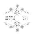 arrangement of herbs and lettering herbal tea vector image vector image