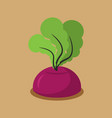 beet growing isolated fresh vegetables in garden vector image vector image