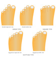 Toe shape vector image
