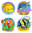 various coral fishes vector image vector image