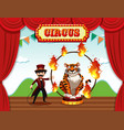 a magician perform on stage vector image