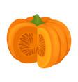 fresh ripe pumpkin on a white vector image vector image