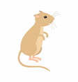 gerbil sitting on his feet vector image vector image
