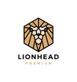 gold lion hexagonal geometric logo icon vector image