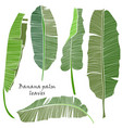 set of silhouette tropical banana palm leaves vector image