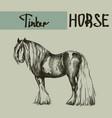 farm tinker cob draft horse vector image
