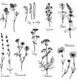 hand drawn medical plants vector image