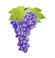 watercolor grape with leafs on white vector image vector image