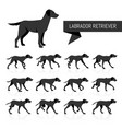 labrador retriever silhouettes vector image