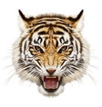 tiger head animal hand draw and paint on white vector image