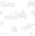 vanilla planifolia flower on white background vector image vector image
